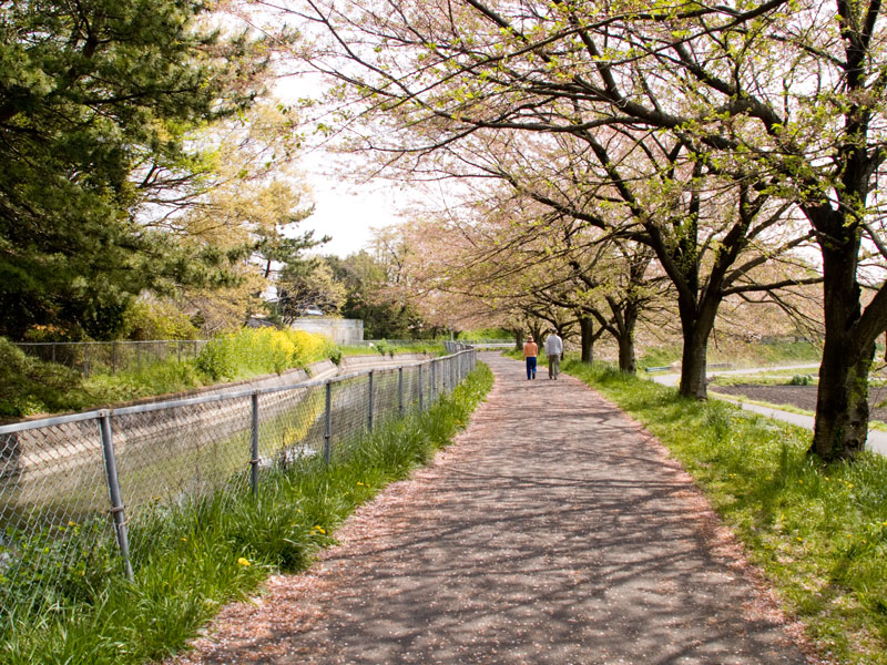 自転車の 自転車 埼玉 コース : 沼代用水路ポタリング コース ...